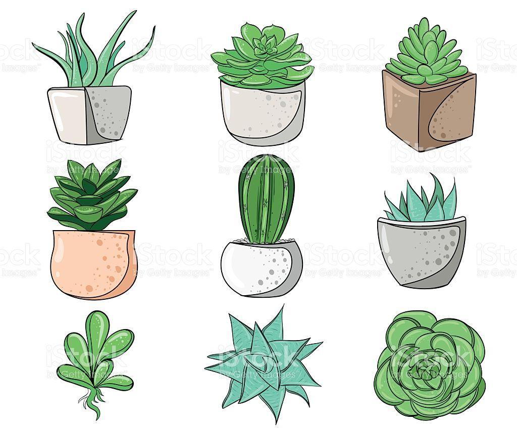 Image Result For Cactus Illustration Dessin Plante Dessin