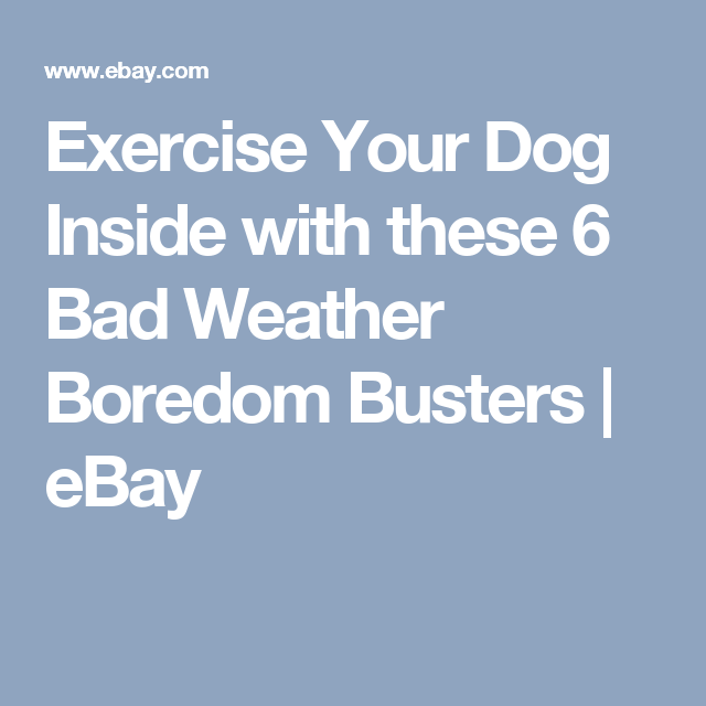 Exercise Your Dog Inside with these 6 Bad Weather Boredom Busters | eBay
