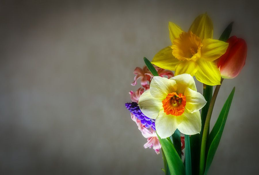 Photo SPRING COLORS by LAURA ZAMFIRESCU on 500px