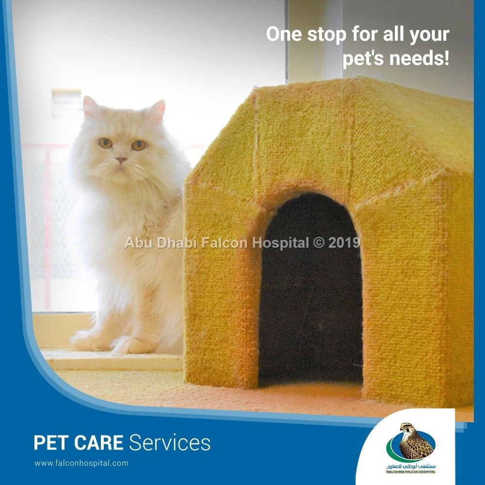 Did You Know That Adfh Pet Care Center Was Originally Established As A Boarding Facility Exclusive To Cats And Dogs Today It Has Abu Dhabi Hospital Pet Care