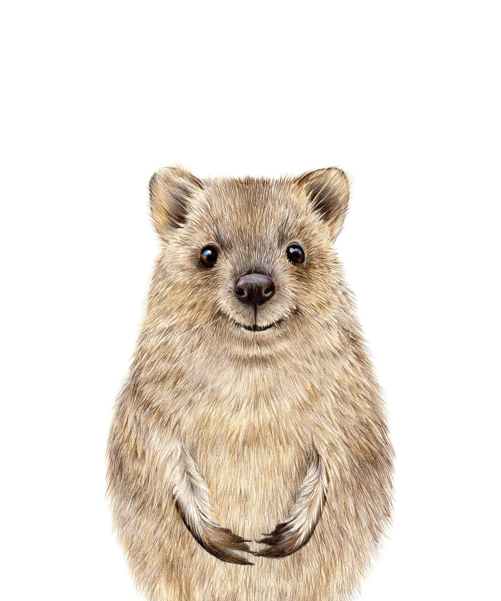 Quokka Print Nursery Baby Animals Printable Nursery Art Kids Etsy In 2020 Quokka Australian Native Animals Animal Art