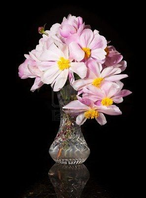 Arrangement of Peony blossoms in a cut glass vase reflecting off table and isolated against black Archivio Fotografico