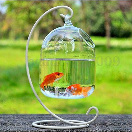 New hanging mount bubble aquarium fish glass vase tank for Plant with fish in vase