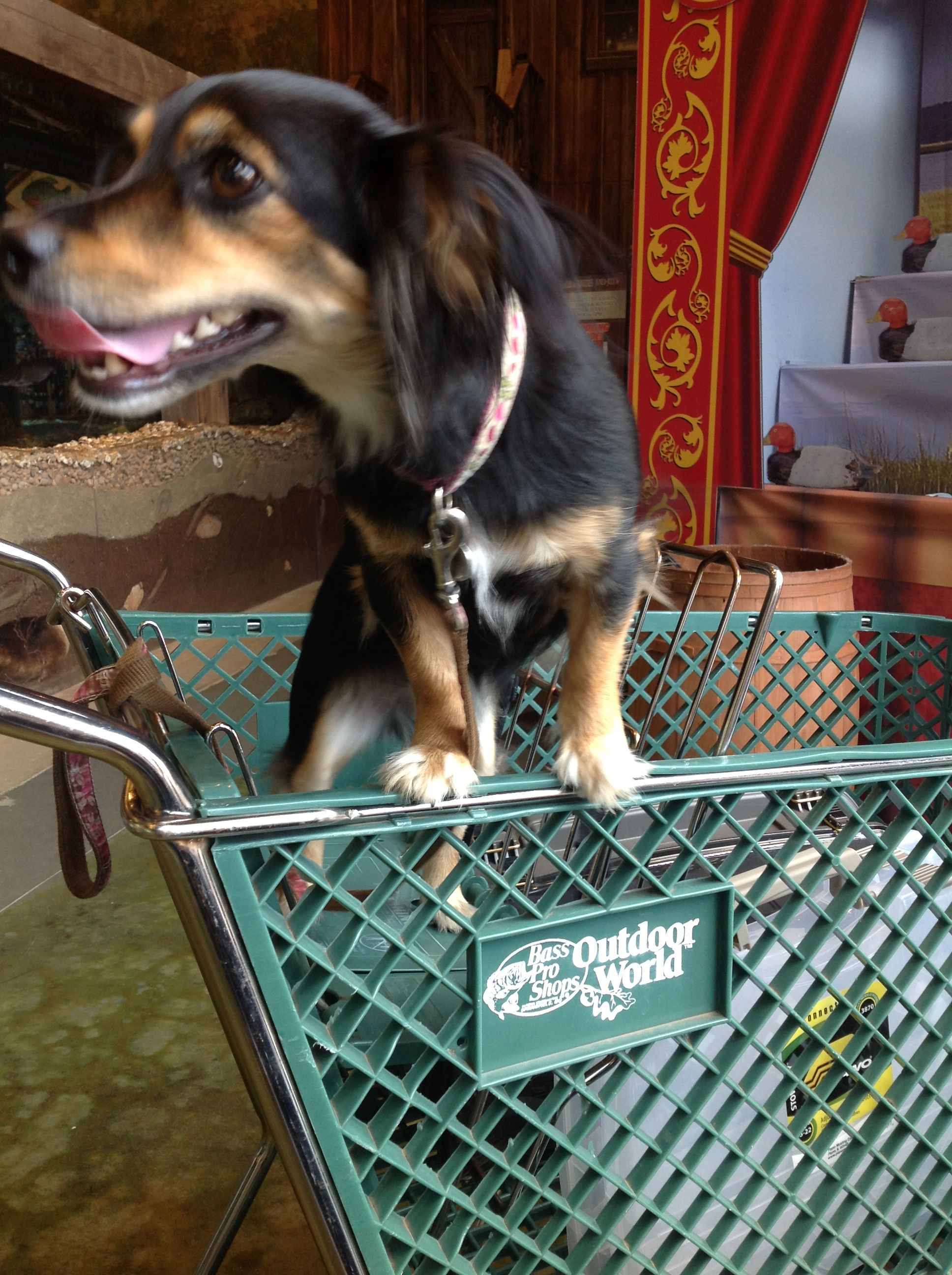 Zoe likes to shop at Bass Pro Shops Columbia Cute dogs