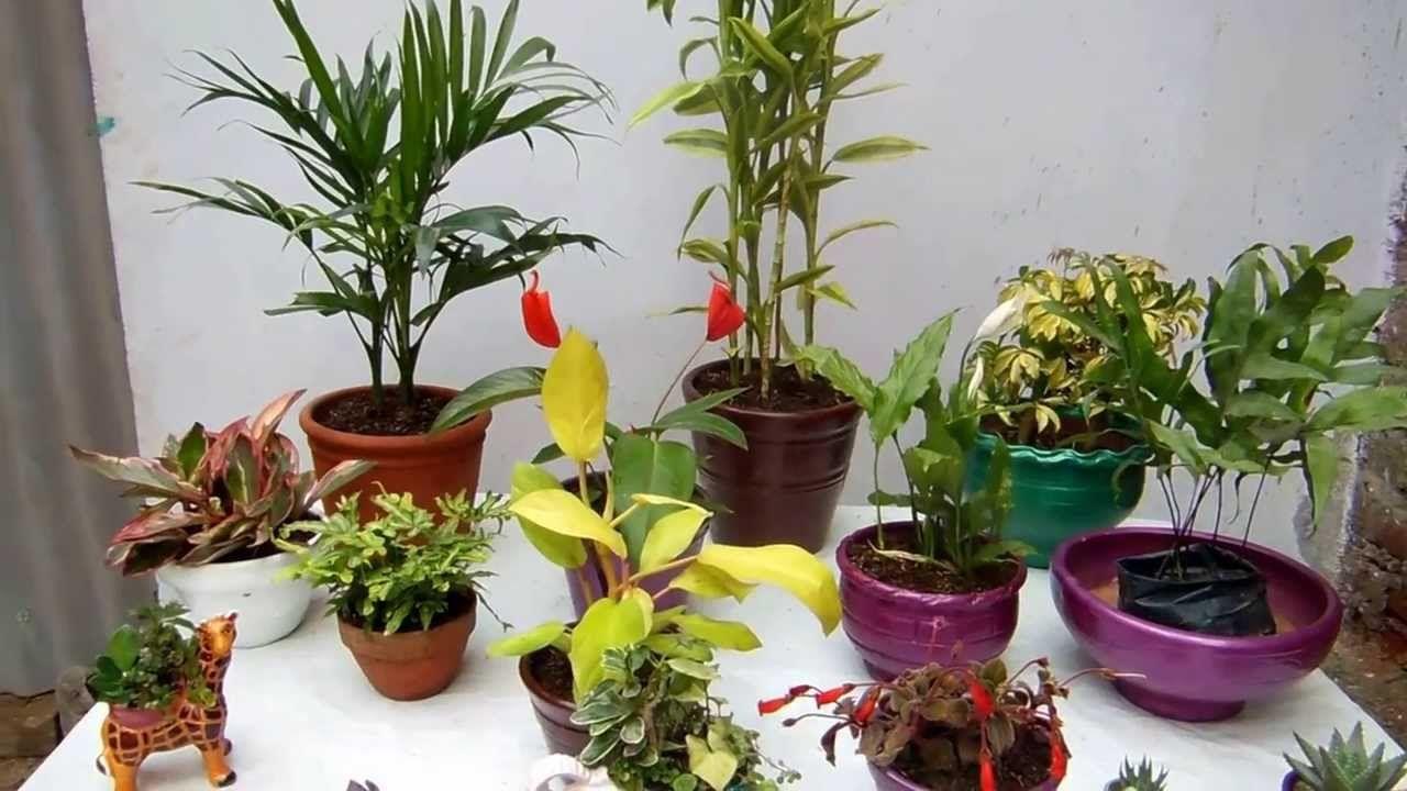 Las macetas y las plantas de interior | Jardinería en general, tips ...