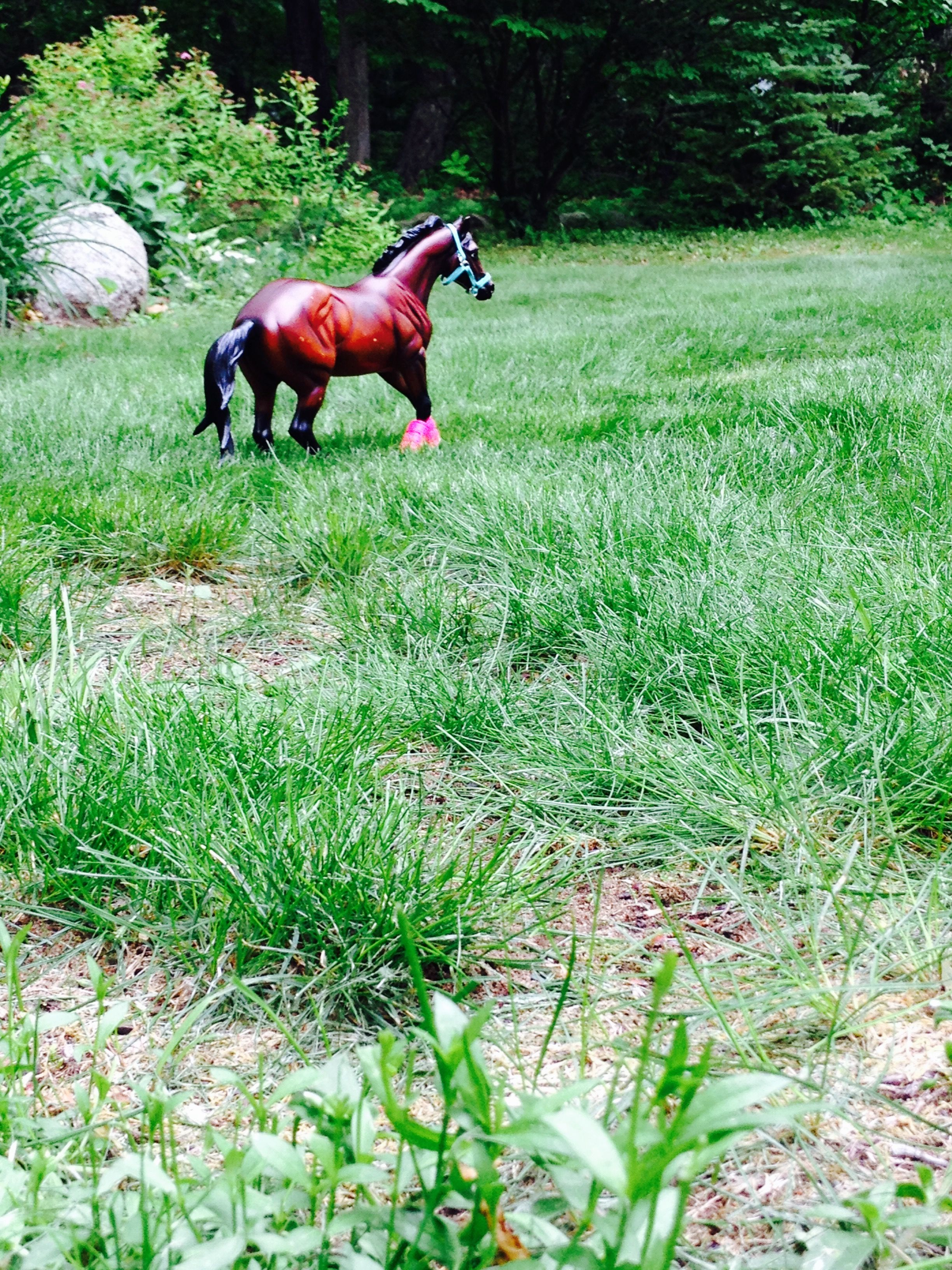 Name: Harley Showname: Harley D. Zip Breed: Quarter Horse Gender: Stallion Owner: Lauren D.