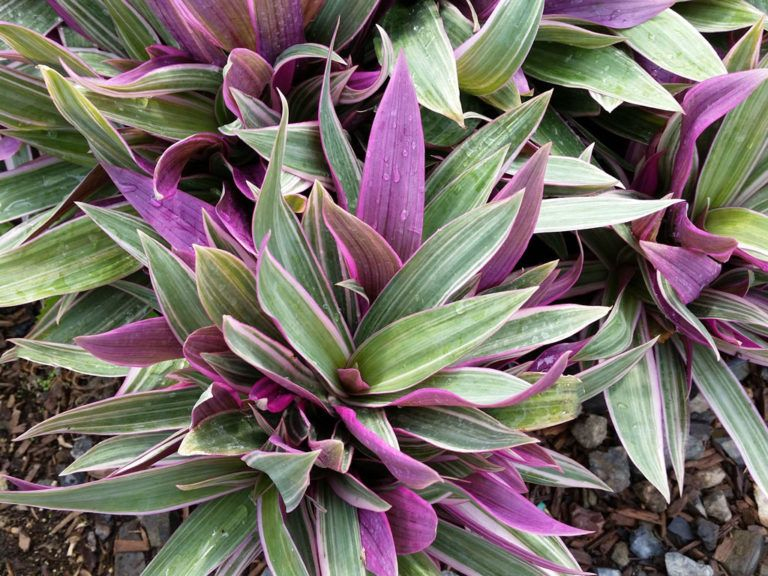Pin By Avis Andrulli On Gardens Plants Unusual Plants Garden Vines