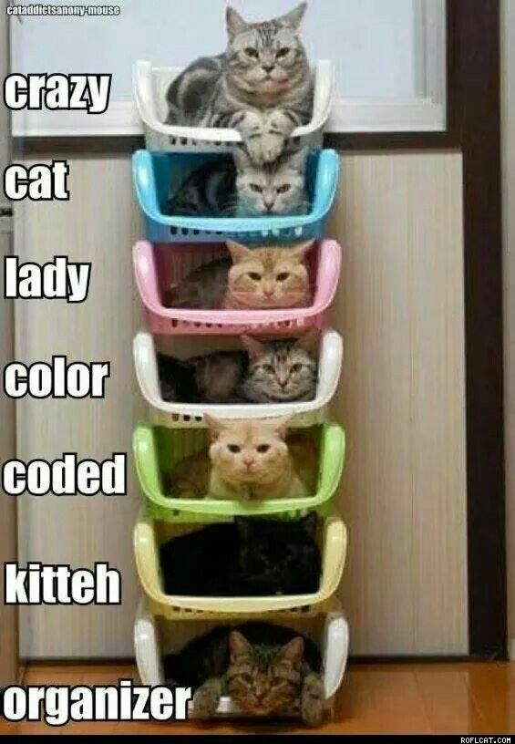 Crazy color coded cats
