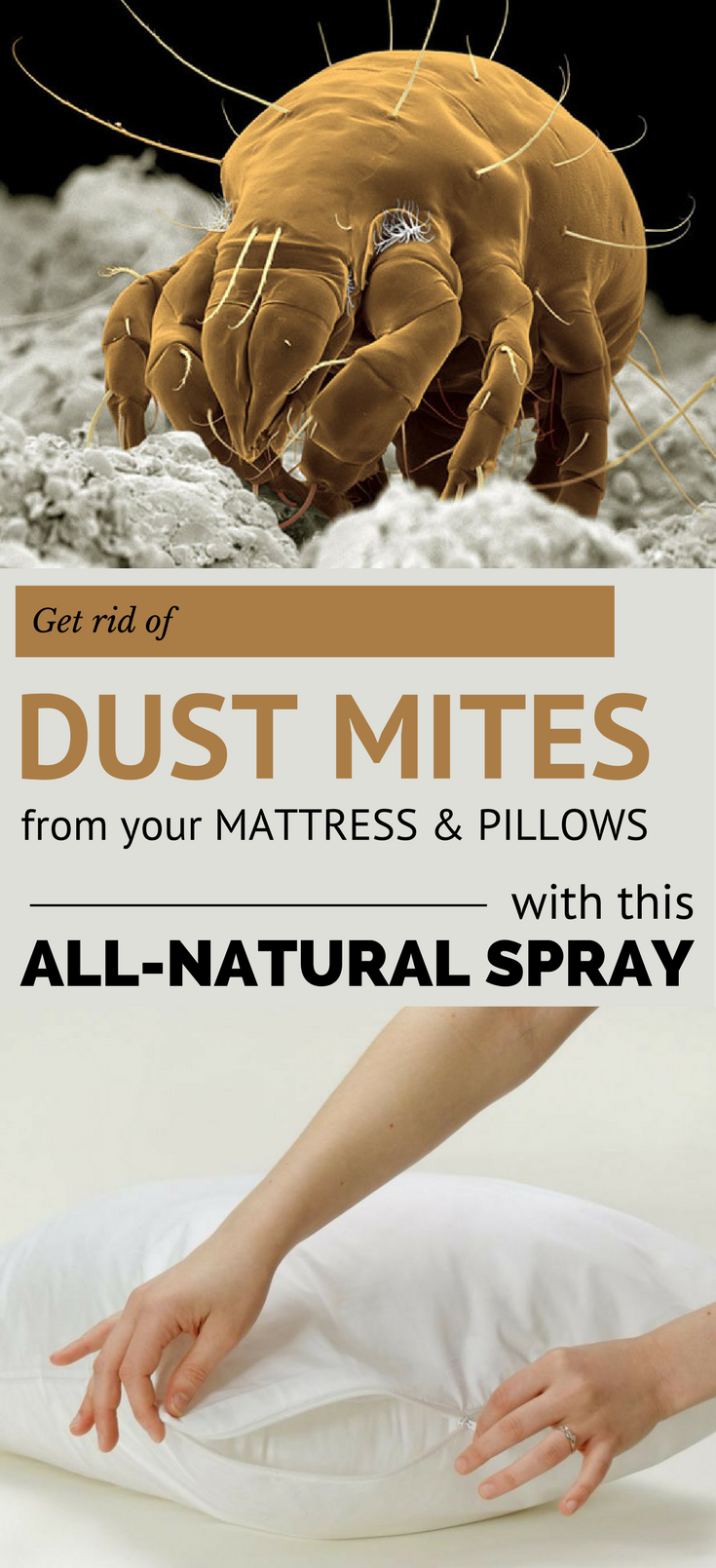 Get Rid Of Dust Mites From Your Mattress And Pillows With This All Natural Spray 101cleaningtips Net Dust Mites Dust Mites Mattress Dust Mite Spray
