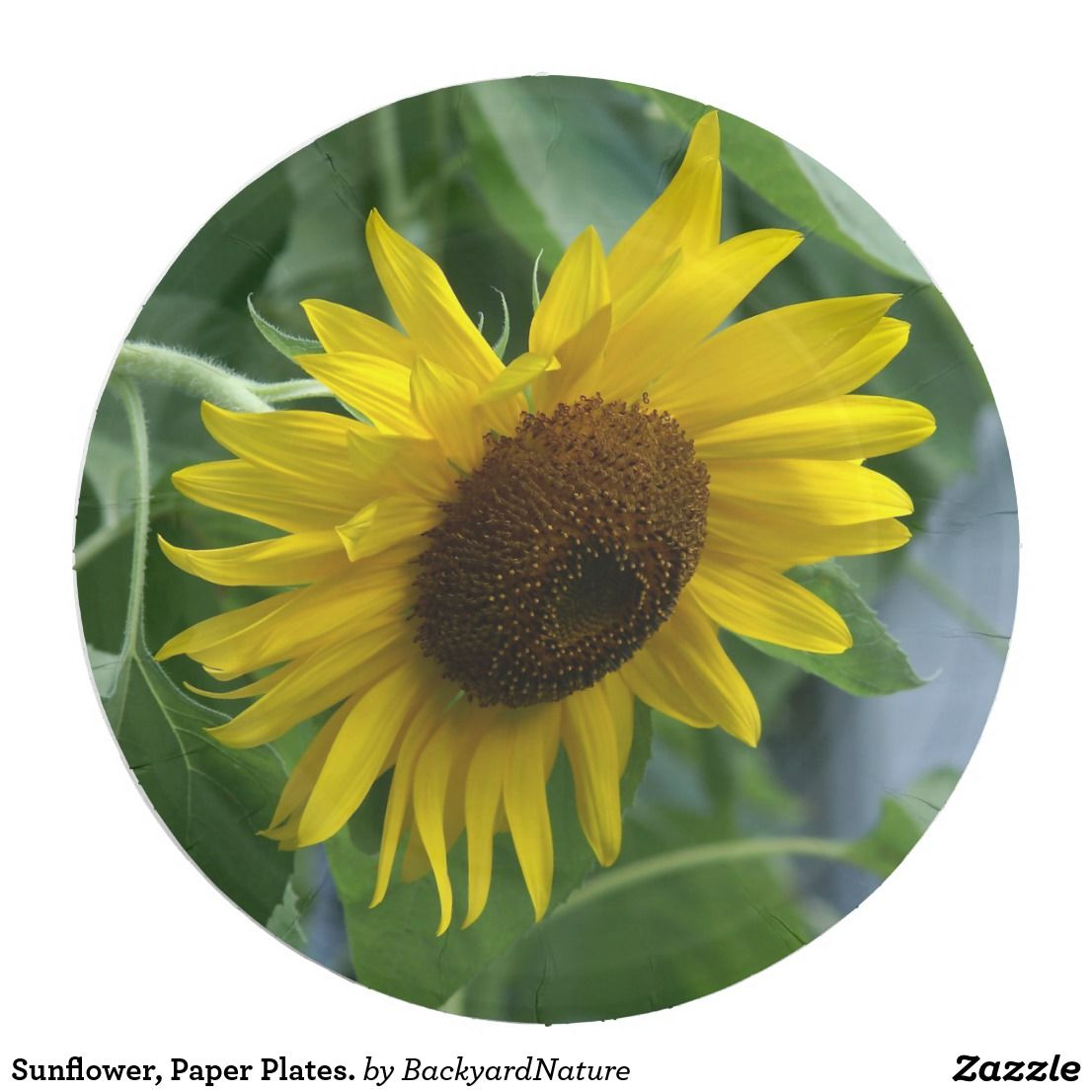 Sunflower, Paper Plates. Paper Plate | Nature internet shopping ...
