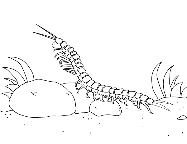 Centipede Coloring Page Free Printable Coloring Pages Bug Tattoo Centipede Sleeve Tattoos