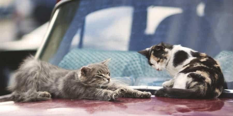 8 Ways to Keep Cats off Cars Cat behavior, Beautiful
