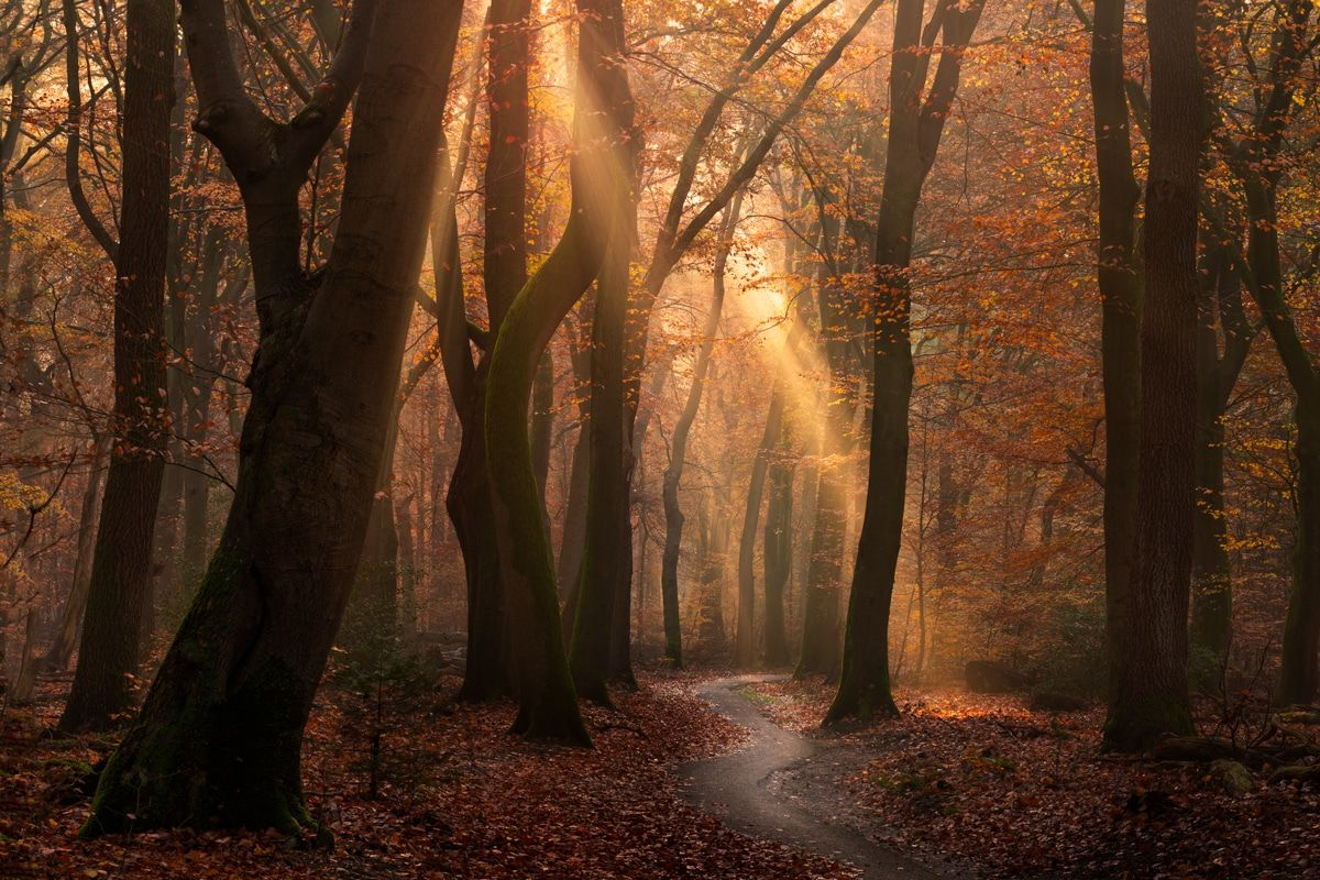 Gorgeous Golden Light Shines Through This Autumnal Forest In The Netherlands Atmospheric Photo Autumn Leaves Photography Autumn Landscape