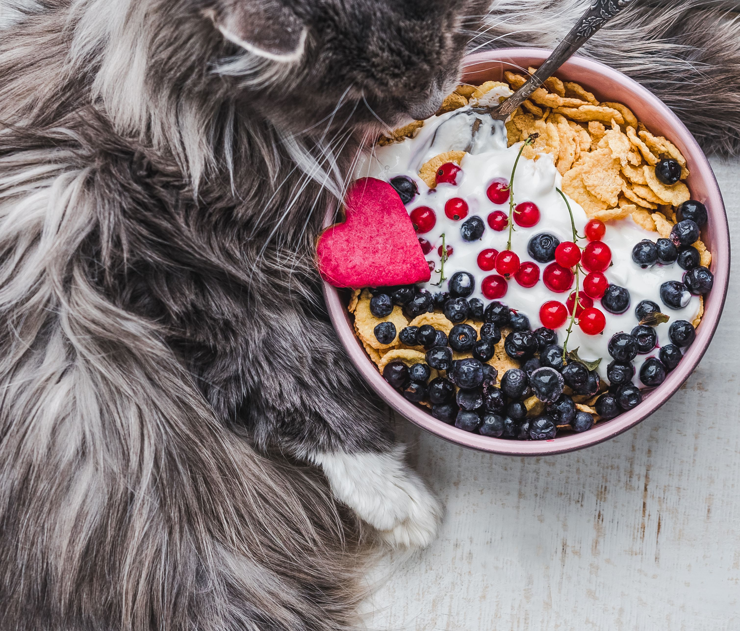 Can Cats Eat Yogurt? Is Yogurt Safe For Cats? CatTime in