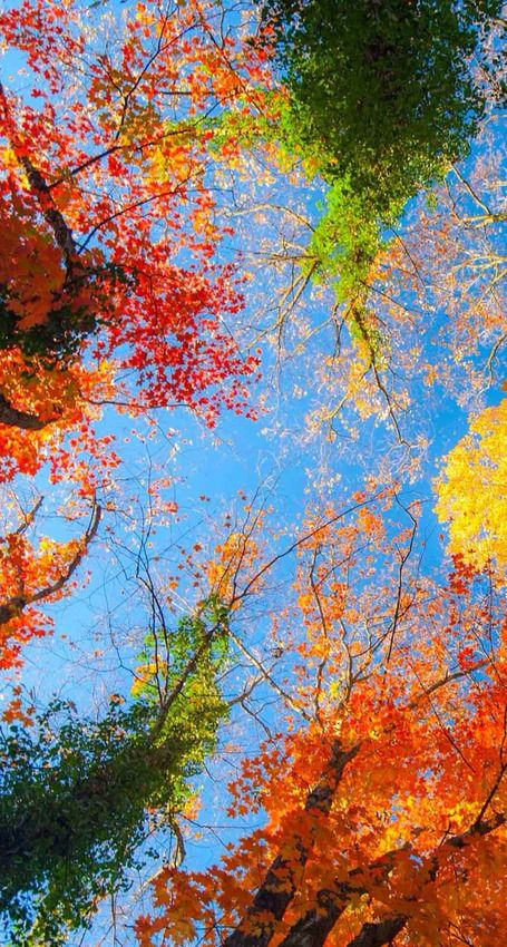 13 Free Iphone 6 Wallpapers That Put Earth S Beauty In Your Pocket Fall Wallpaper Tumblr Iphone Wallpaper Fall Fall Wallpaper