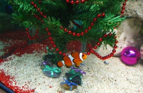 There's not much out there commercially in terms of Christmas decorations  for aquariums, but no matter. With a little ingenuity, you can still make  your ... - How To Decorate Your Aquarium For The Holidays Aquarium Aquarium