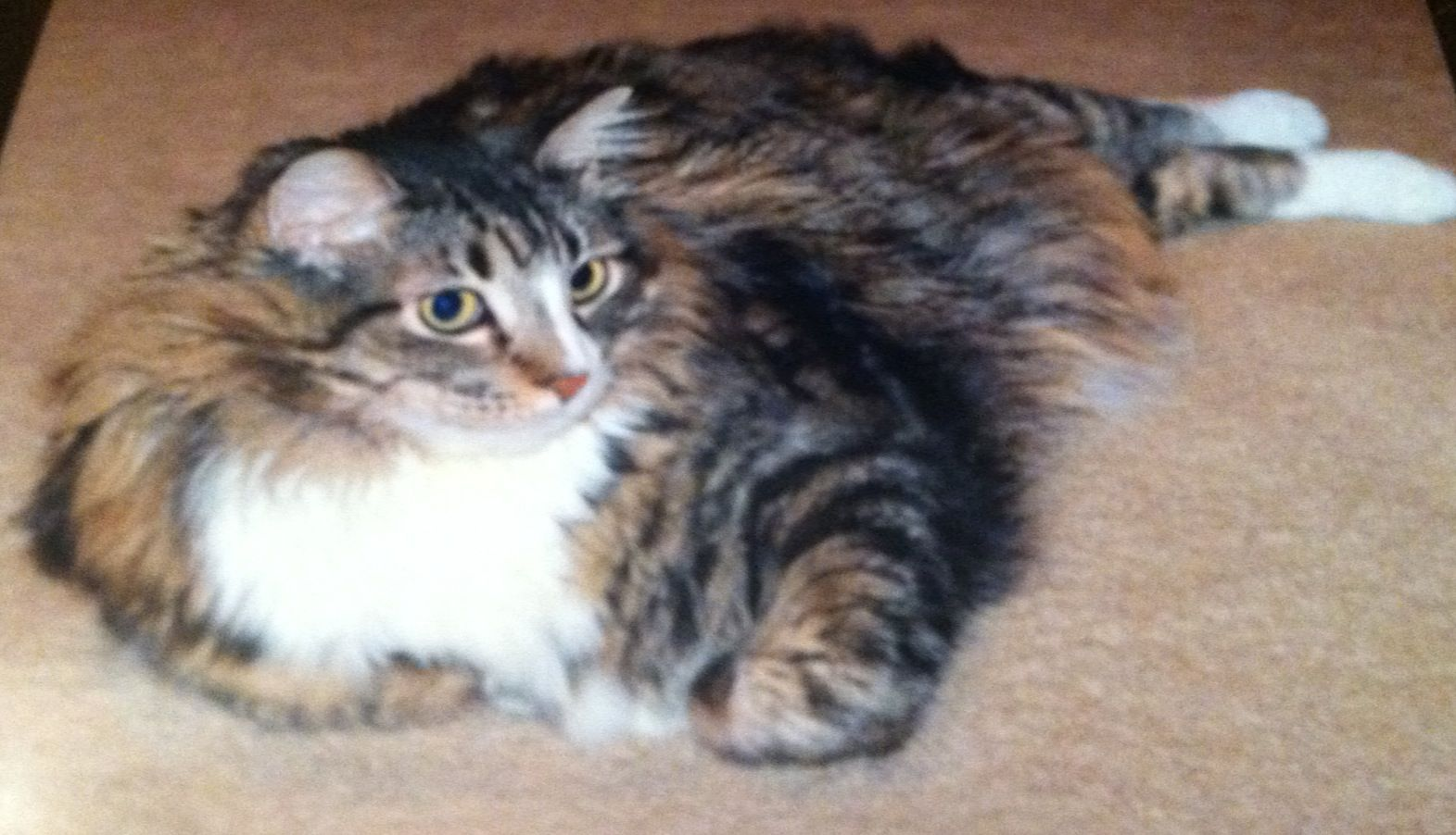Cat Anti Meow Collar