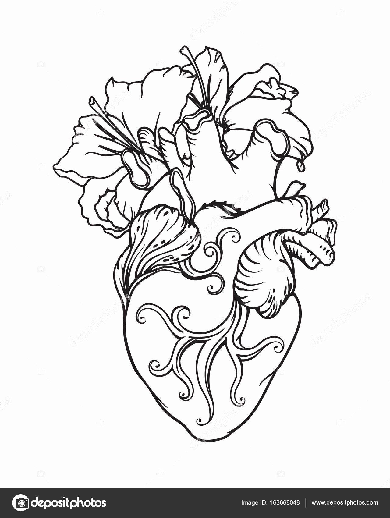Anatomical Heart Coloring Pages Inspirational Stylized Anatomical Human Heart Drawing Heart Wi Heart Coloring Pages Anatomical Heart Tattoo Human Heart Drawing