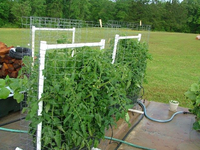 Pvc Piping With Wire Screening To Support Tomato Plants In Earthbox System Tomato Garden Garden Containers Plants