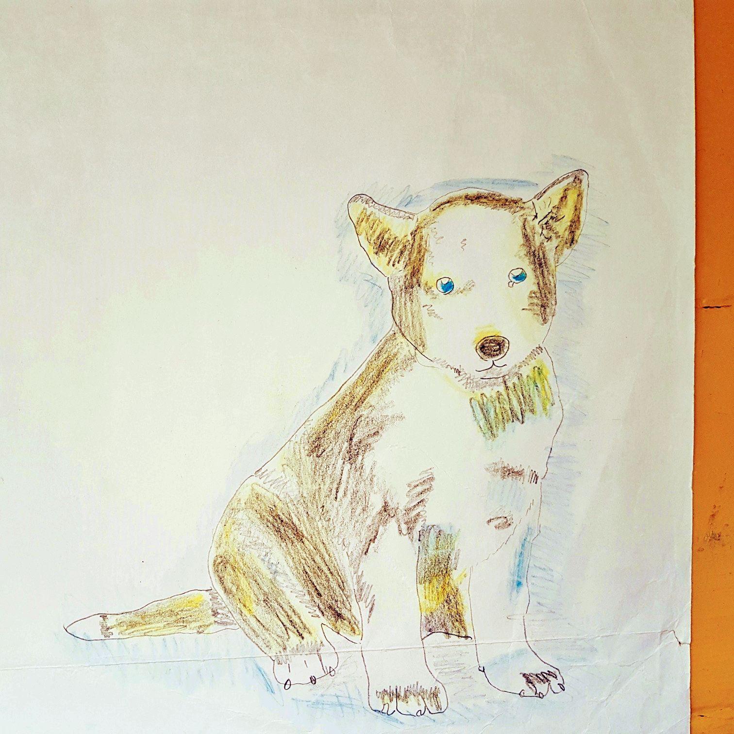 Meine Zeichnung von einen Husky und den Esel iaa