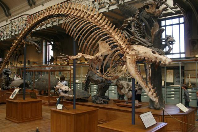Meet Basilosaurus, the King Lizard Whale   Prehistoric animals,  Prehistoric, Prehistoric dinosaurs