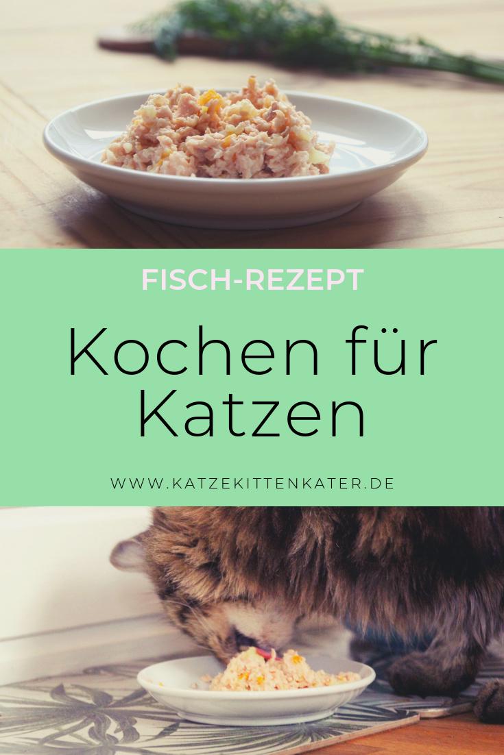 Habt ihr Lust selbst für eure Katzen zu kochen? Ich habe ein tolles Rezept für euch!  #katzekittenkater #katzenblog #rezept