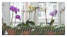 Orchideen: So pflegen Sie die Königin der Blumen So pflegen Sie Orchideen richt #orchideenpflege