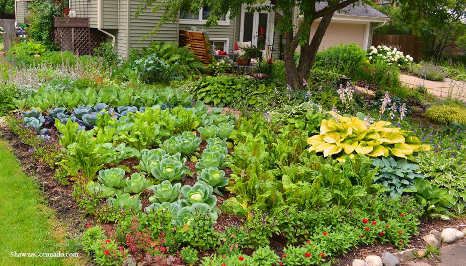 Front Lawn Vegetable Garden Design | Vegetable garden ...