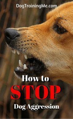 How To Stop Dog Aggression Dog Training Tips Dog Training