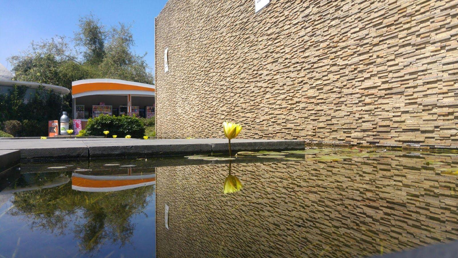 La flor sobre el espejo - Sr Sol. Foto de flor de loto reflejándose sobre un estanque, imagen bastante nítida