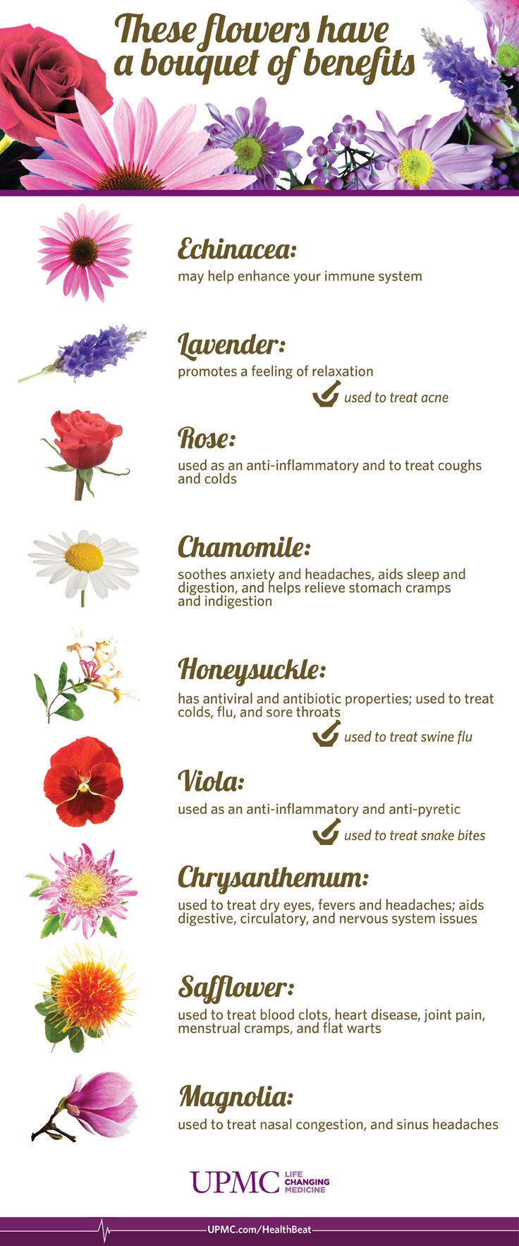 Infographic Health Benefits Of Flowers Upmc Healthbeat Organic Gardening Flowers Echinacea