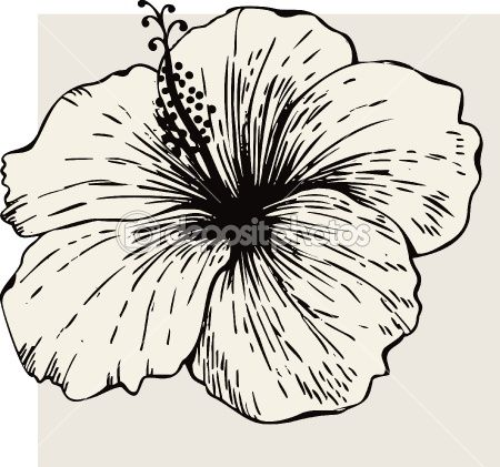Hibiscus Outline Hibiscus Drawing Flower Drawing Plant Drawing
