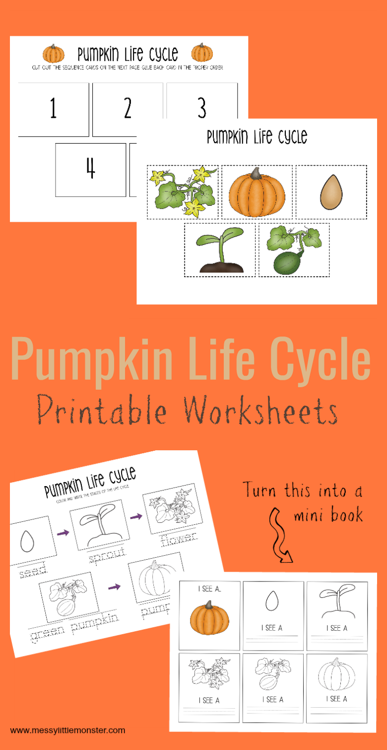 Printable Pumpkin Life Cycle Worksheets Pumpkin life