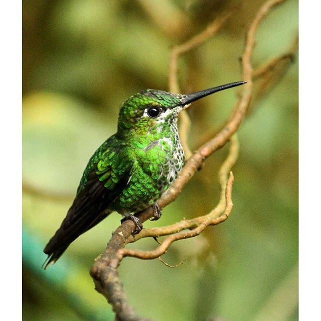 Isn't this hummingbird adorable?
