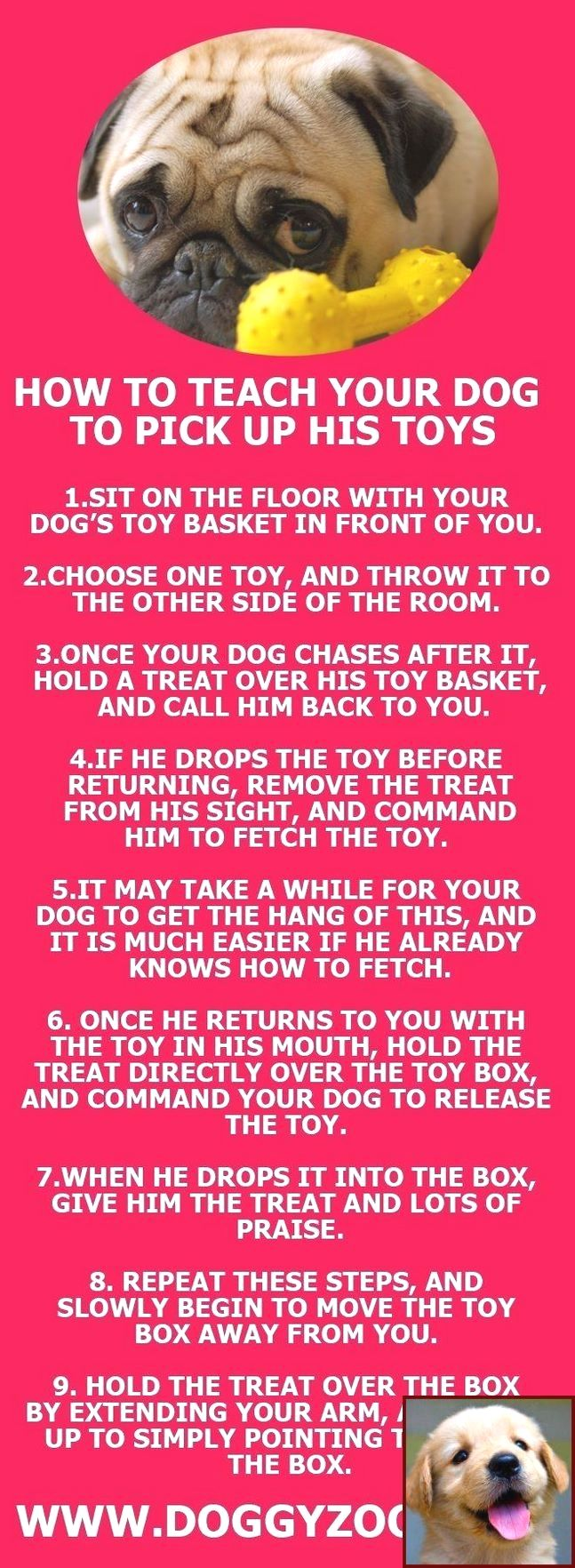 Pin By Sara Cronk On Pets Dog Behavior Problems Dog Training
