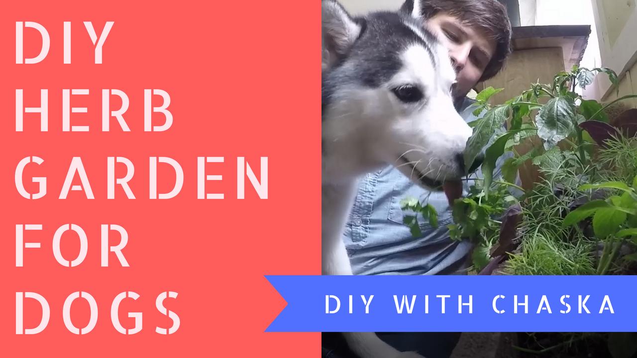 How to make a pet safe herb garden. Herb garden, Indoor