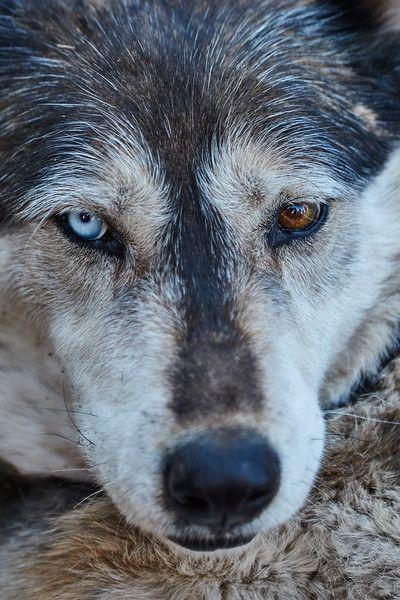 Rocky Mountain Wolf Foundation - Ken Bates | Zwierzęta