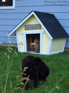 DIY Crooked Dog House