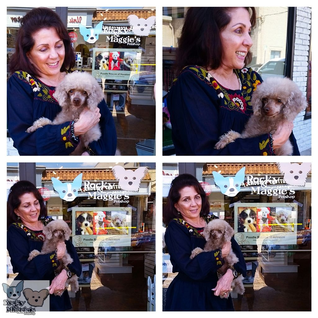 Renee From Poodlerescuehouston Got Adopted Today At Our Pet Adoption Event We Live Partnering With Local Housto Pet Adoption Event Poodle Rescue Pet Adoption