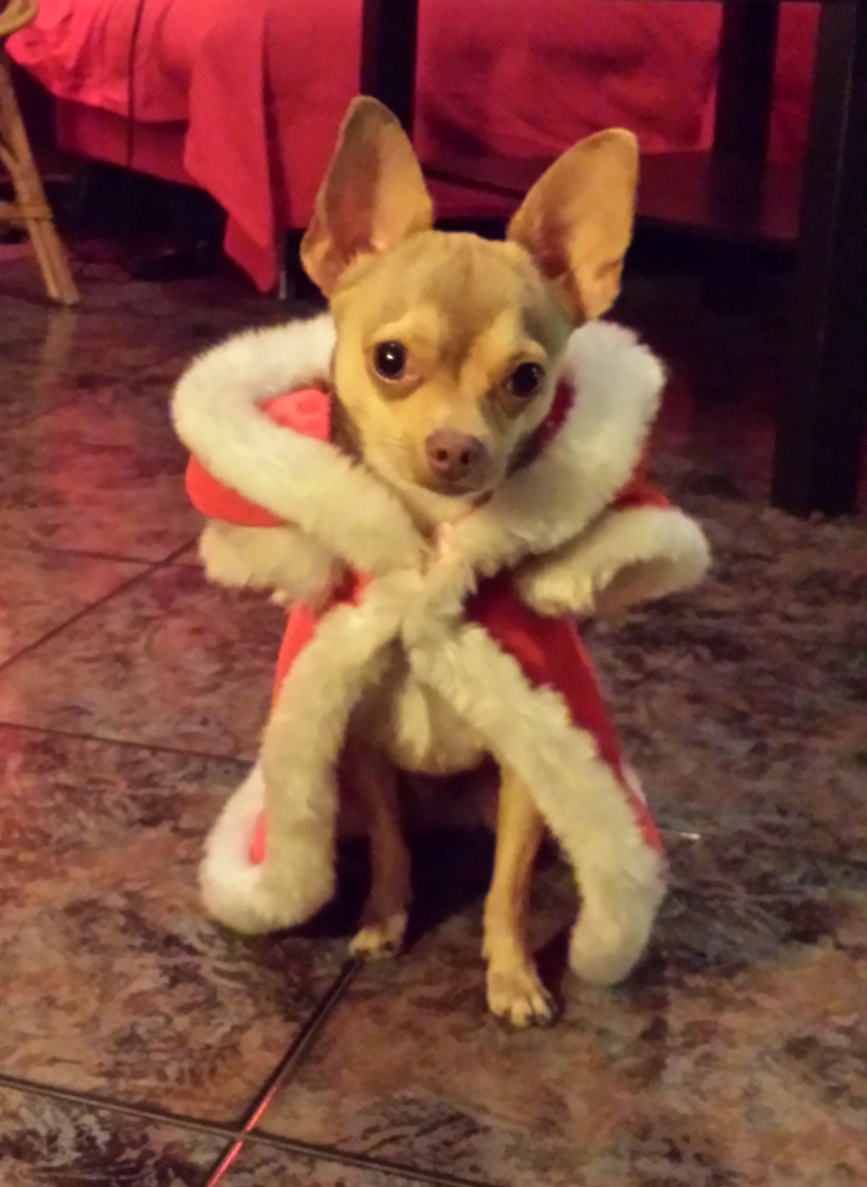 Ana's dog! Play PetRescueSaga now >