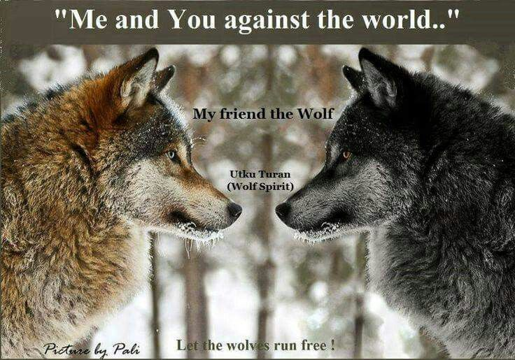 Me and you against the world Wolf photos, Wolf, Yin yang
