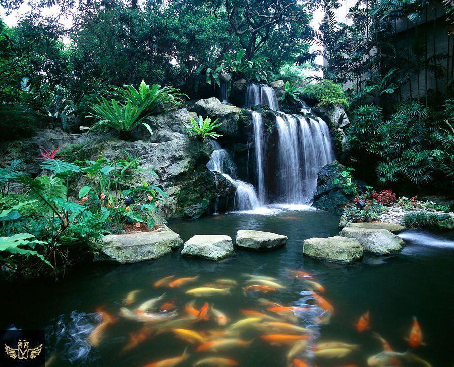 Koi pond beautiful places pinterest for Koi pond waterfall