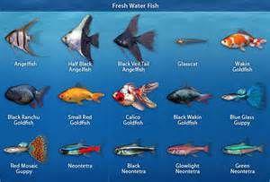 Fresh Water Aquarium Fish Tropical Fish Tanks Tropical Freshwater Fish Freshwater Aquarium Fish