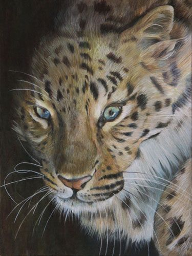 On the Prowl. Acrylic painting of a leopard on 16x12inch board. By artist Claire Hughes.