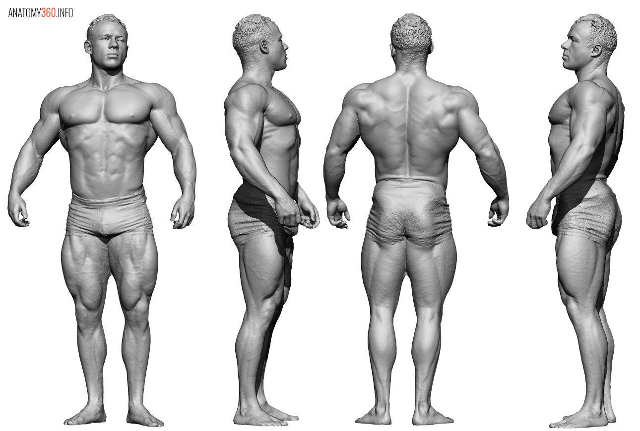 Pin van Mohammed Anuz op Human Anatomy Reference   Pinterest