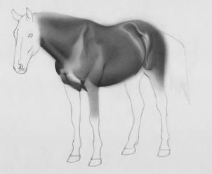 how to draw a realistic horse step 11 | Creative streak! | Drawings