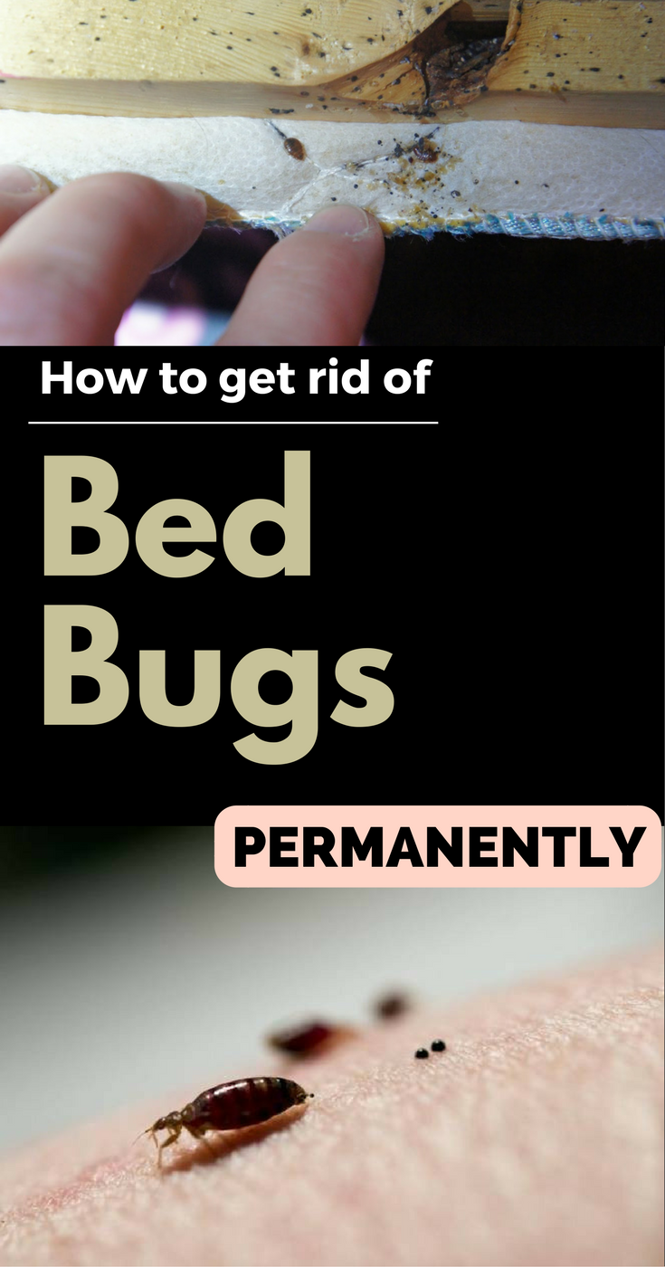 How To Get Rid Of Bed Bugs Permanently (With images) Rid