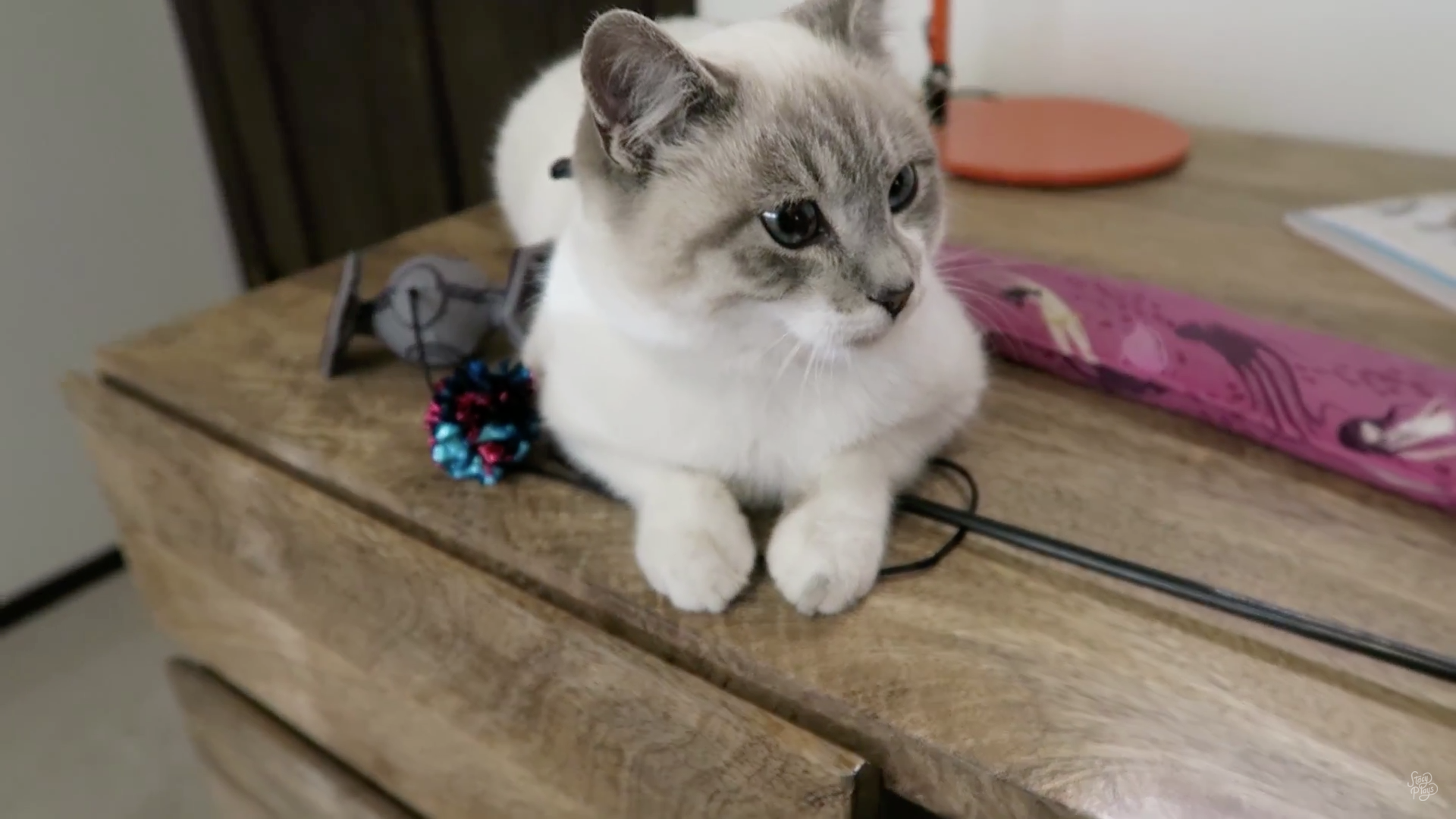 Milquetoast Stacy Plays Cat Cute Animals Cute Cats Cats