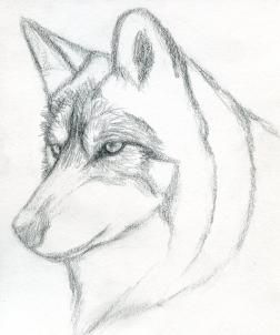 how to draw an easy wolf head