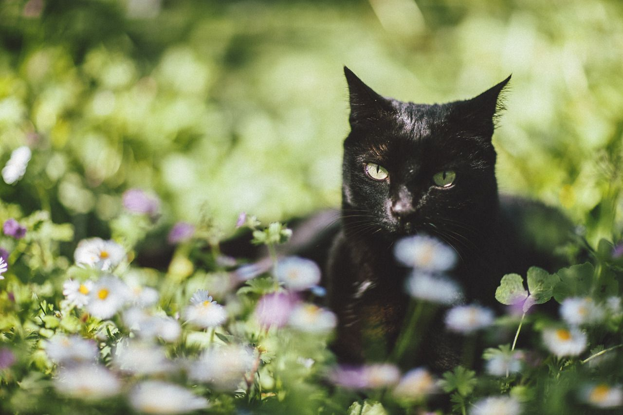 { tiny black panther and the spring } luna, green grass